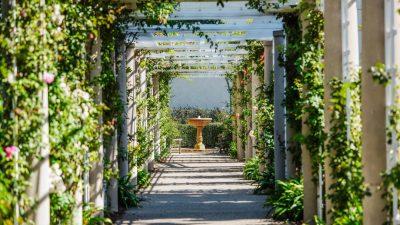 Konstrukcja rozwijająca ogrodową florę – pergola